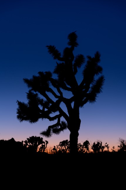 Joshua Tree National Park - Sunset