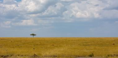 Africa-89